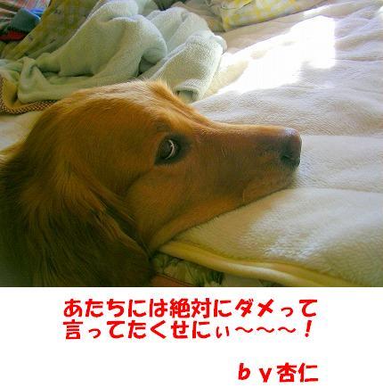 SANY0006_20090123171904.jpg