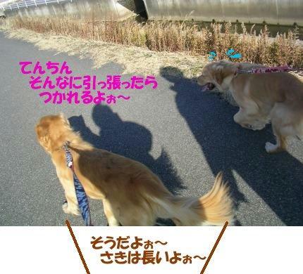 SANY0006_20090209000946.jpg