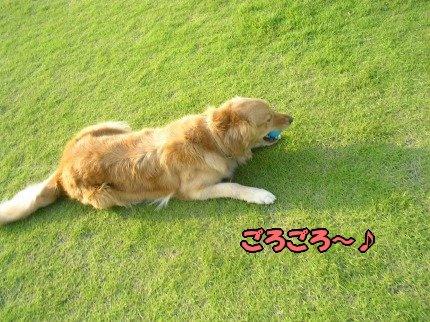 SANY0006_20090618212659.jpg