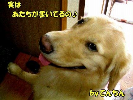SANY0006_20090722131008.jpg