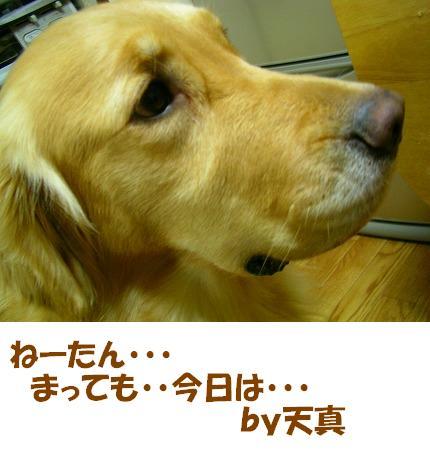SANY0007_20081222193004.jpg