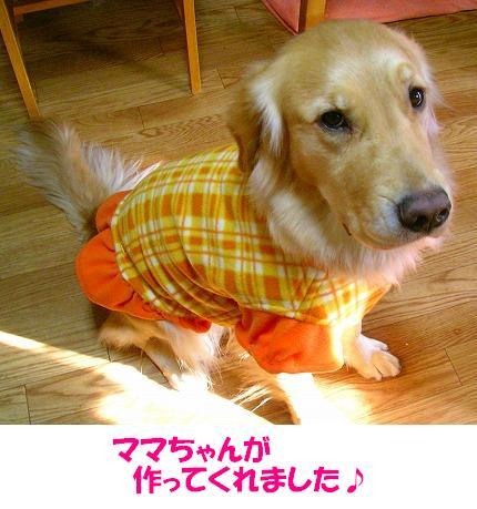 SANY0007_20081229140113.jpg