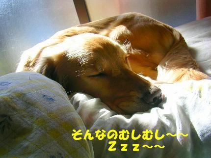 SANY0007_20090123171912.jpg