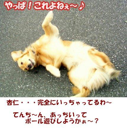 SANY0007_20090201021009.jpg