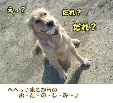 SANY0007_20090205005919.jpg
