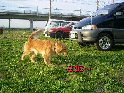SANY0007_20090513190140.jpg