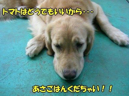 SANY0007_20090803184739.jpg