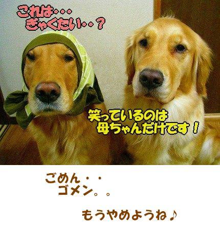 SANY0008_01.jpg