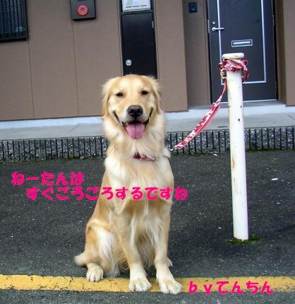 SANY0008_20090127165049.jpg
