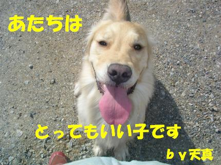 SANY0008_20090130022027.jpg