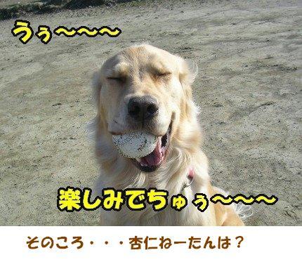 SANY0008_20090205005927.jpg