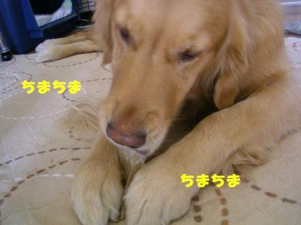 SANY0008_20090206224948.jpg