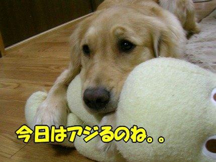 SANY0008_20090401130634.jpg