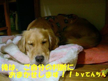 SANY0009_20090121010230.jpg