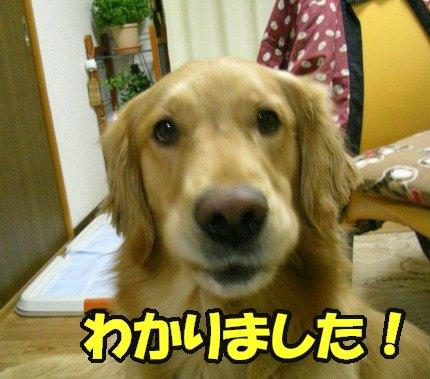 SANY0009_20090204004346.jpg