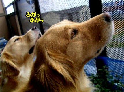 SANY0009_20090316175044.jpg