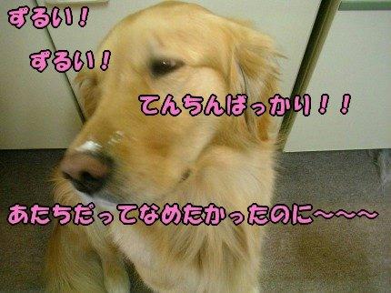 SANY0009_20090408001107.jpg