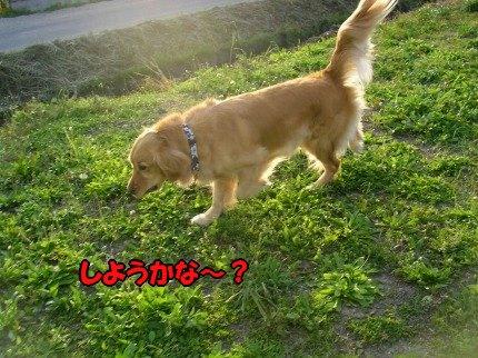 SANY0009_20090513190141.jpg