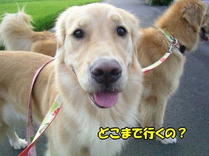 SANY0009_20090819072628.jpg