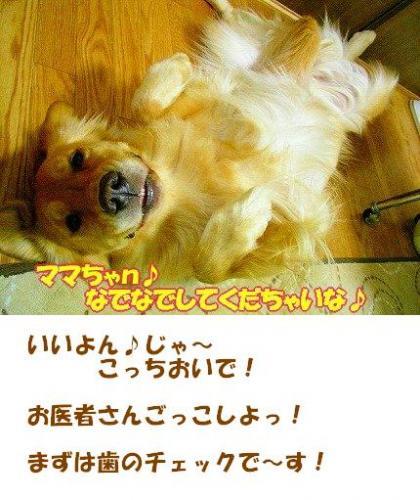 SANY0010_01.jpg