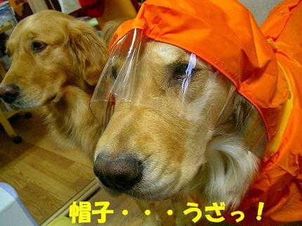 SANY0010_20090122165200.jpg