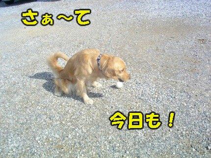 SANY0010_20090130022046.jpg