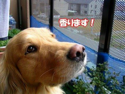 SANY0010_20090316175015.jpg