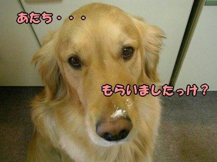 SANY0010_20090408001121.jpg