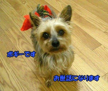 SANY0010_20090422071155.jpg