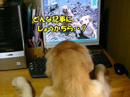 SANY0010_20090722131008.jpg