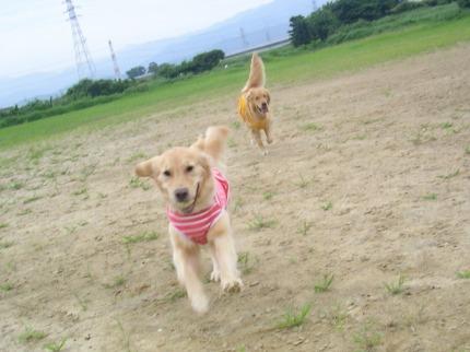 SANY0010_20090725101950.jpg