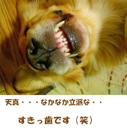 SANY0011_01.jpg
