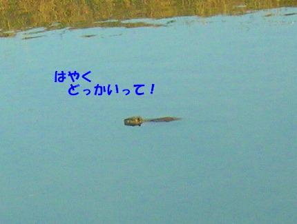 SANY0011_20090108173626.jpg