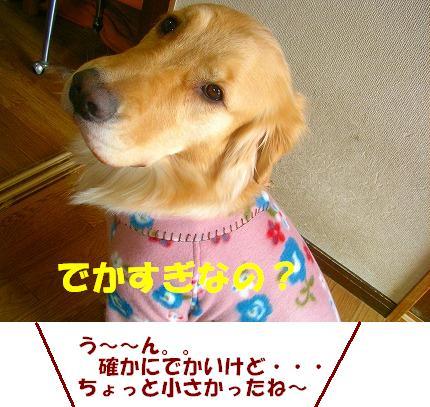 SANY0011_20090117141240.jpg
