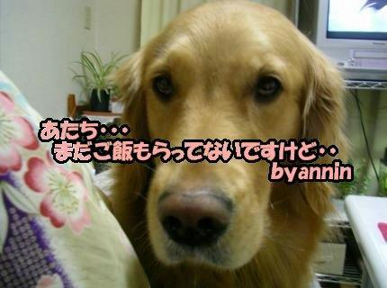 SANY0011_20090223033106.jpg