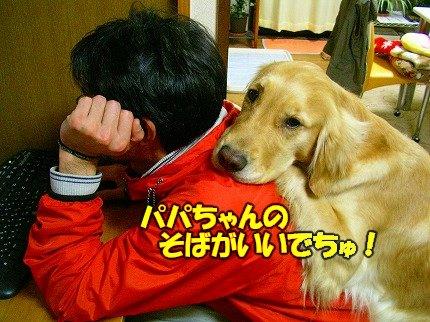 SANY0011_20090302201620.jpg