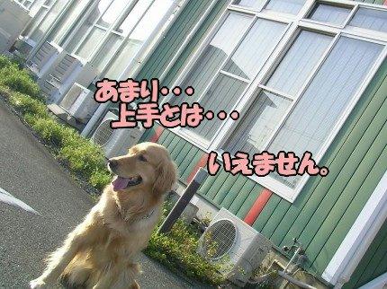 SANY0011_20090317185230.jpg