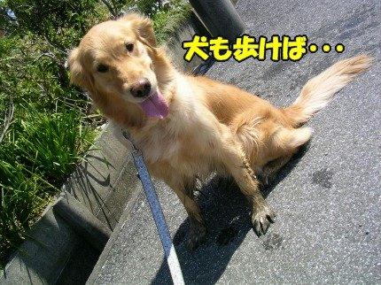 SANY0011_20090402150527.jpg