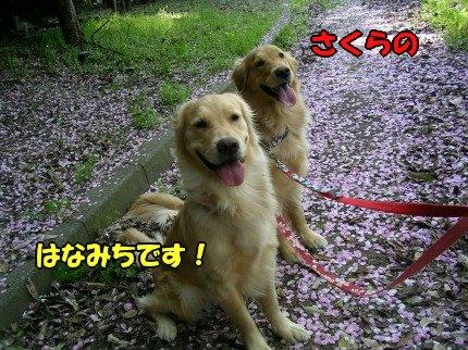 SANY0011_20090412232904.jpg