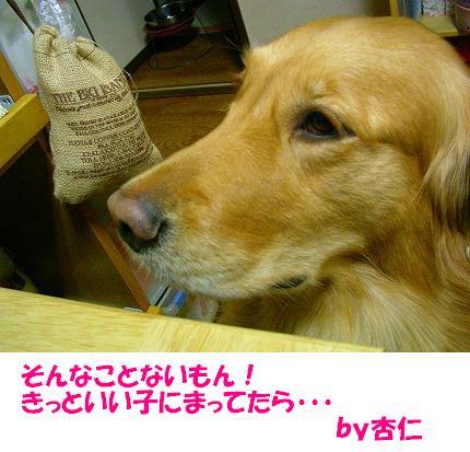 SANY0012_20081222193019.jpg