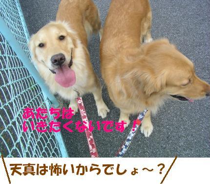 SANY0012_20090127165230.jpg