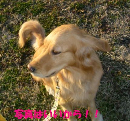 SANY0012_20090128185512.jpg