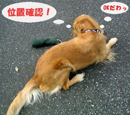 SANY0012_20090201020746.jpg