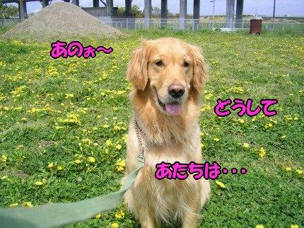 SANY0012_20090423062043.jpg