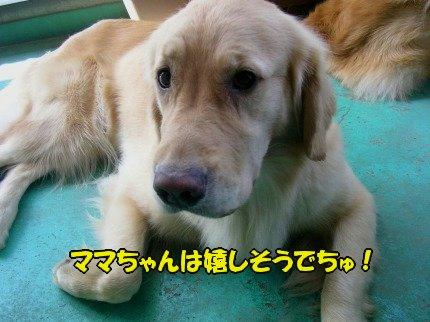 SANY0012_20090803184739.jpg
