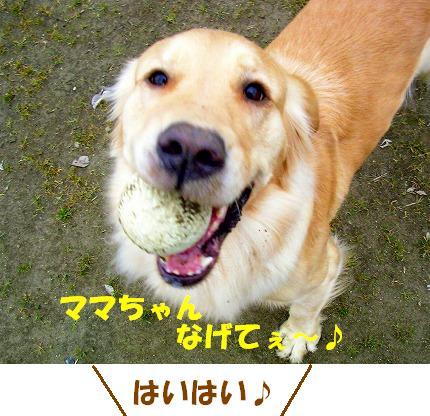 SANY0013_20090121222157.jpg