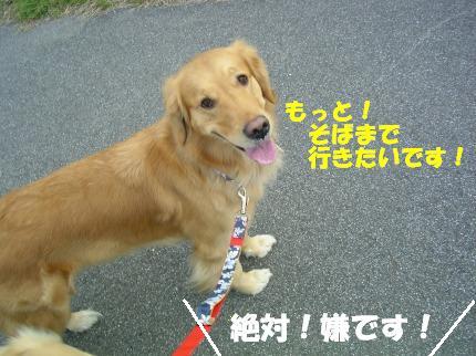 SANY0013_20090127165213.jpg