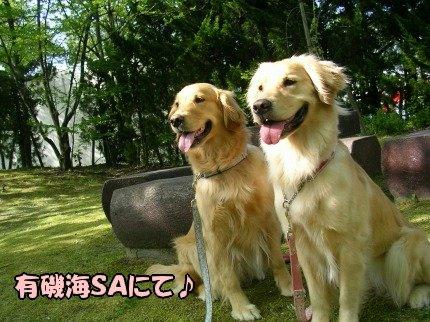 SANY0013_20090506162554.jpg