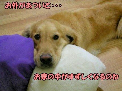 SANY0013_20090803184842.jpg