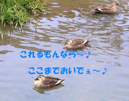 SANY0014_20090127165159.jpg